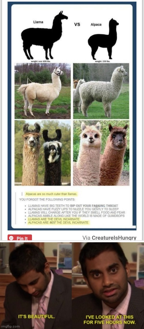 My new favorite meme. Viva la Alpaca! | image tagged in i've looked at this for 5 hours now | made w/ Imgflip meme maker
