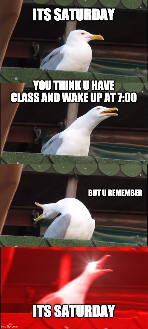 Who can relate? |  ITS SATURDAY; YOU THINK U HAVE CLASS AND WAKE UP AT 7:00; BUT U REMEMBER; ITS SATURDAY | image tagged in memes,inhaling seagull | made w/ Imgflip meme maker