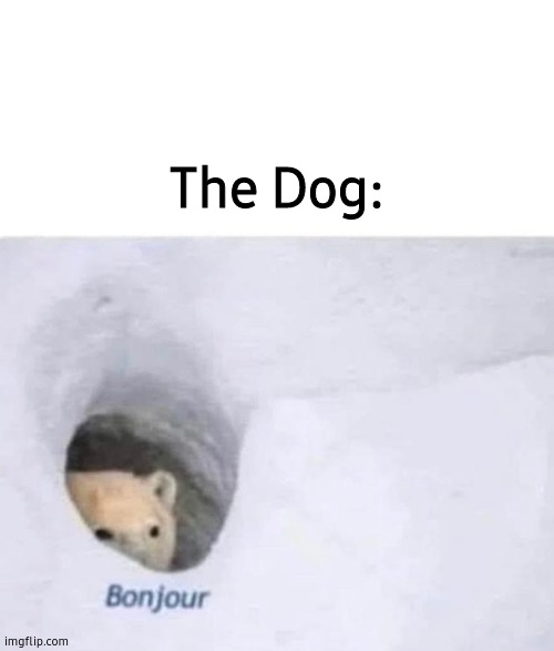 Bonjour | The Dog: | image tagged in bonjour | made w/ Imgflip meme maker