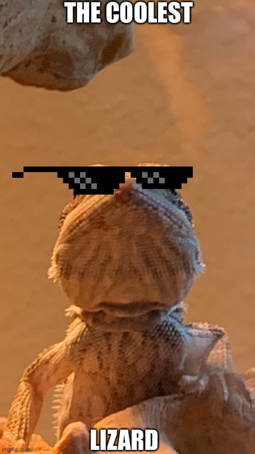 The lizard |  THE COOLEST; LIZARD | image tagged in lizard | made w/ Imgflip meme maker