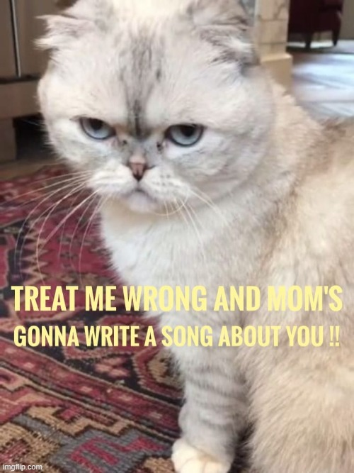 [Taylor Swift's cat fires a warning shot] | image tagged in taylor swift's cat,taylor swift,taylor swift crazy,cats,cat | made w/ Imgflip meme maker