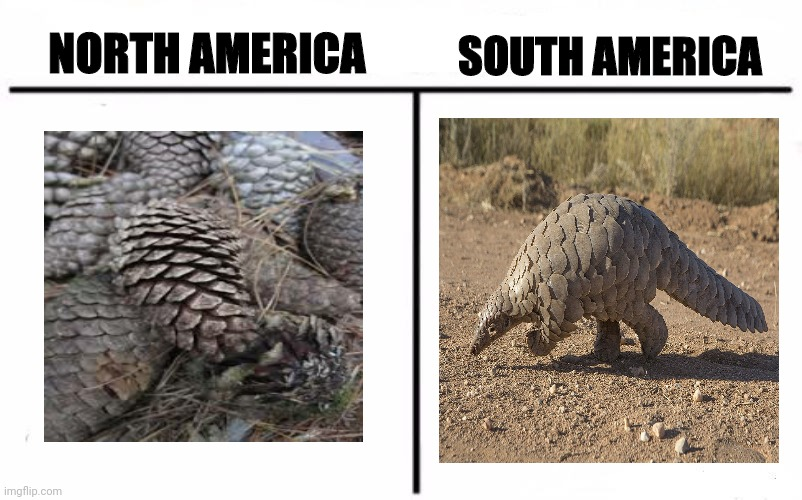 Who wore it better? |  SOUTH AMERICA; NORTH AMERICA | image tagged in who wore it better,funny,memes,fun | made w/ Imgflip meme maker