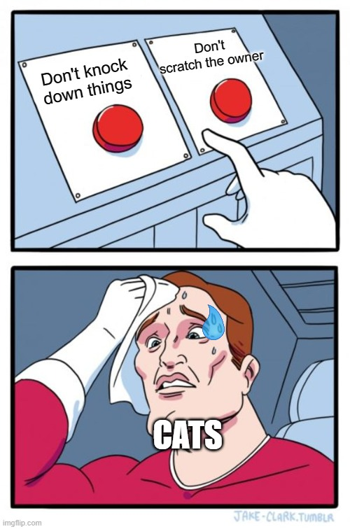 Cats be like... |  Don't scratch the owner; Don't knock down things; CATS | image tagged in memes,two buttons | made w/ Imgflip meme maker