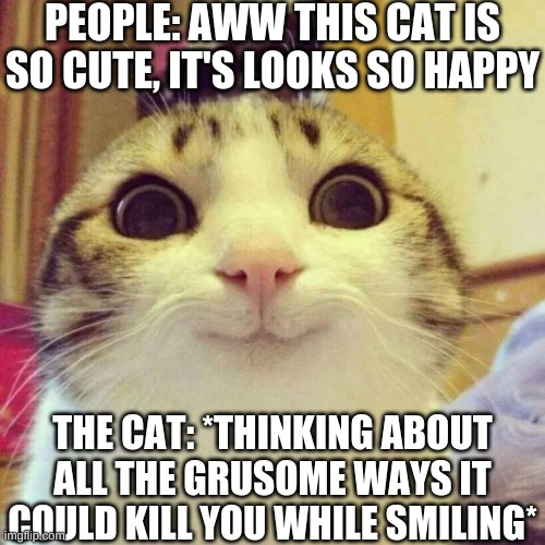 Cat |  PEOPLE: AWW THIS CAT IS SO CUTE, IT'S LOOKS SO HAPPY; THE CAT: *THINKING ABOUT ALL THE GRUSOME WAYS IT COULD KILL YOU WHILE SMILING* | image tagged in memes,smiling cat | made w/ Imgflip meme maker