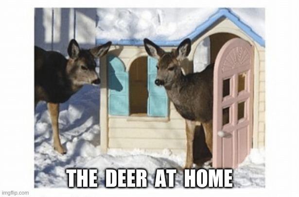 The Deer At Their House | image tagged in deer,house,home,playhouse,winter,snow | made w/ Imgflip meme maker