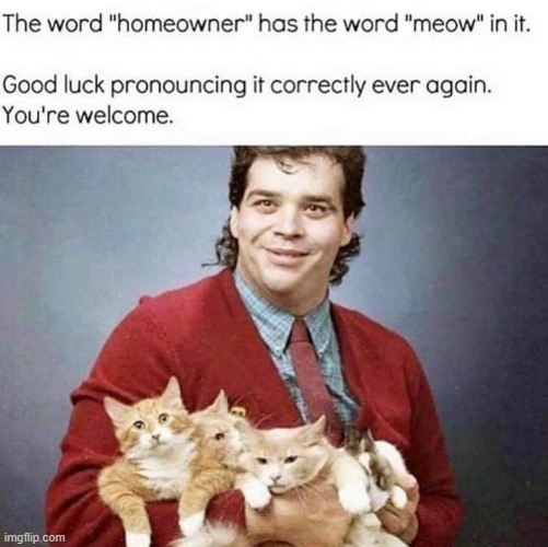 :eyeroll: | image tagged in cats,cat,repost,lol,home,bad puns | made w/ Imgflip meme maker