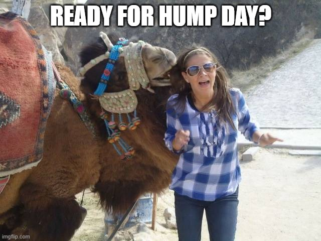 READY FOR HUMP DAY? | image tagged in camel | made w/ Imgflip meme maker