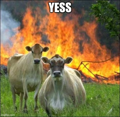 Evil Cows Meme | YESS | image tagged in memes,evil cows | made w/ Imgflip meme maker