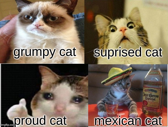 The cats |  grumpy cat; suprised cat; proud cat; mexican cat | image tagged in grumpy cat,scared cat,crying cat | made w/ Imgflip meme maker