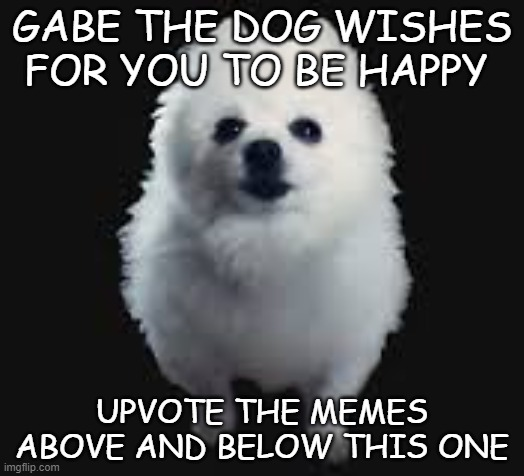 GABE THE DOG WISHES FOR YOU TO BE HAPPY; UPVOTE THE MEMES ABOVE AND BELOW THIS ONE | image tagged in gabe the dog | made w/ Imgflip meme maker