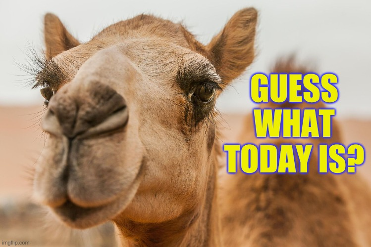 Hump Day |  GUESS WHAT TODAY IS? | image tagged in hump day camel | made w/ Imgflip meme maker