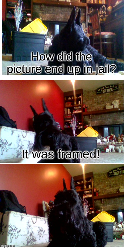 Bad Pun Dog but It's my dog |  How did the picture end up in jail? It was framed! | image tagged in memes,bad pun dog,funny | made w/ Imgflip meme maker