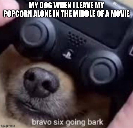 MY DOG WHEN I LEAVE MY POPCORN ALONE IN THE MIDDLE OF A MOVIE | image tagged in bravo six going bark | made w/ Imgflip meme maker