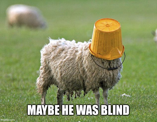stupid sheep | MAYBE HE WAS BLIND | image tagged in stupid sheep | made w/ Imgflip meme maker
