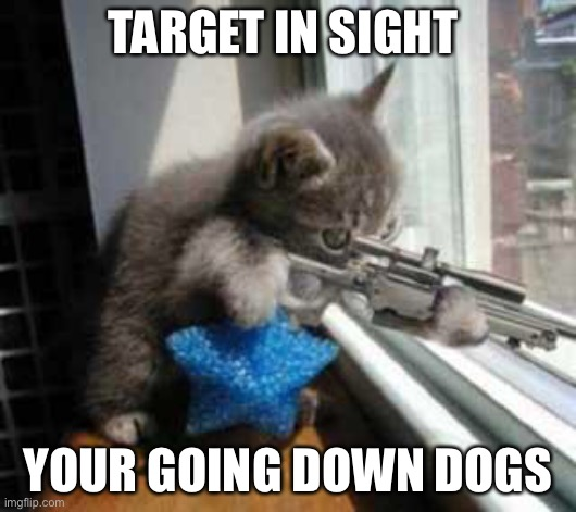 CatSniper |  TARGET IN SIGHT; YOUR GOING DOWN DOGS | image tagged in catsniper | made w/ Imgflip meme maker