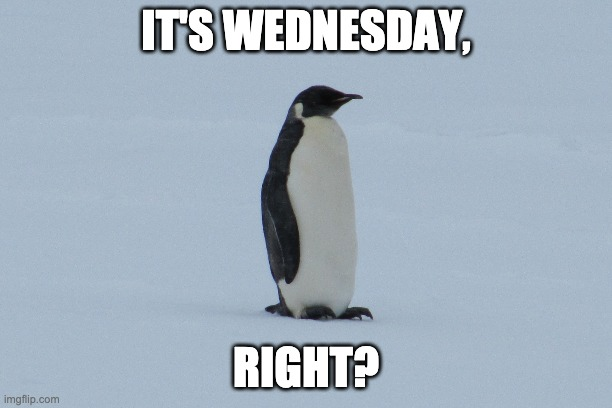 Wednesday Penguin |  IT'S WEDNESDAY, RIGHT? | image tagged in wednesday,penguin,days of the week,confused confusing confusion,hump day | made w/ Imgflip meme maker