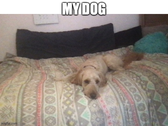 this is my dogo |  MY DOG | image tagged in doge | made w/ Imgflip meme maker