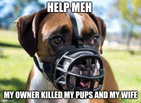 HELP MEH; MY OWNER KILLED MY PUPS AND MY WIFE | image tagged in i wanna die | made w/ Imgflip meme maker