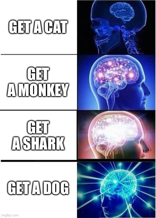 Expanding Brain Meme |  GET A CAT; GET A MONKEY; GET A SHARK; GET A DOG | image tagged in memes,expanding brain | made w/ Imgflip meme maker