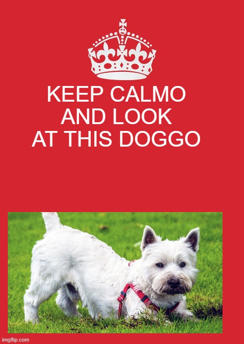 Keep Calm And Carry On Red Meme |  KEEP CALMO AND LOOK AT THIS DOGGO | image tagged in memes,keep calm and carry on red | made w/ Imgflip meme maker