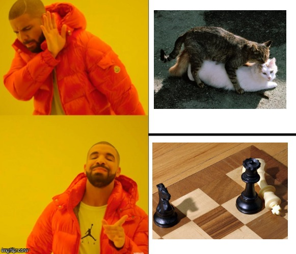 The feeling of ecstasy | image tagged in yes no drake,cat,chess | made w/ Imgflip meme maker
