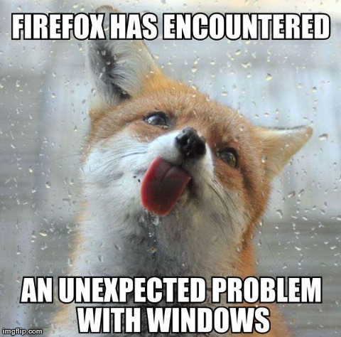 ~Firefox~ | image tagged in funny,animals,cute,fox,internet,computers | made w/ Imgflip meme maker