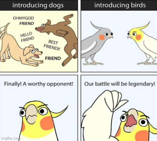 Finally | image tagged in birds,finally a worthy opponent,funny,memes,comics/cartoons | made w/ Imgflip meme maker