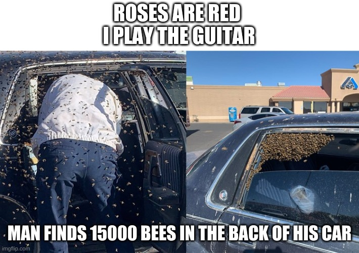 true story fyi |  ROSES ARE RED  I PLAY THE GUITAR; MAN FINDS 15000 BEES IN THE BACK OF HIS CAR | image tagged in memes,bees,roses are red | made w/ Imgflip meme maker