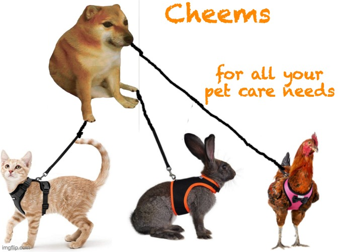 Now the leash is on the other paw |  Cheems; for all your pet care needs | image tagged in cheems,pets | made w/ Imgflip meme maker