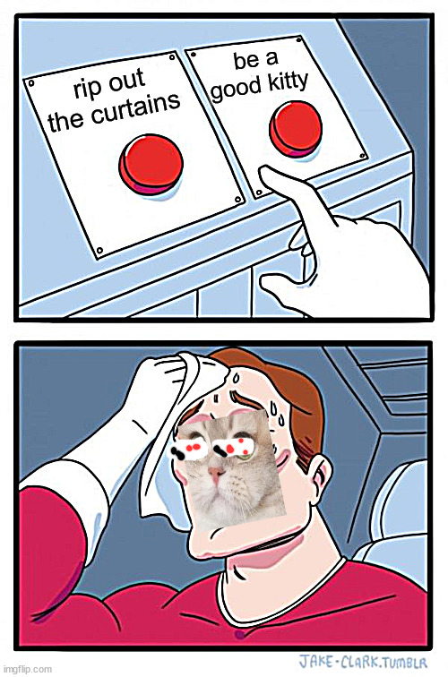 i dont have a cat but whatever |  be a good kitty; rip out the curtains | image tagged in memes,two buttons,cat | made w/ Imgflip meme maker