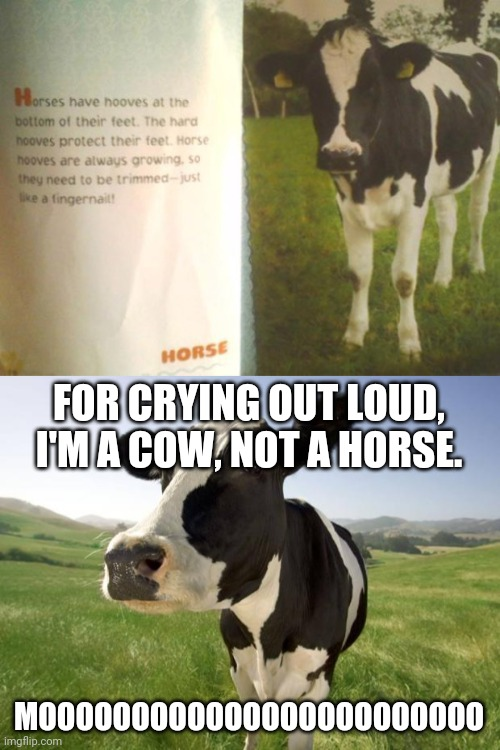 Cow |  FOR CRYING OUT LOUD, I'M A COW, NOT A HORSE. MOOOOOOOOOOOOOOOOOOOOOOOO | image tagged in cow,you had one job,memes,meme,animals,cows | made w/ Imgflip meme maker