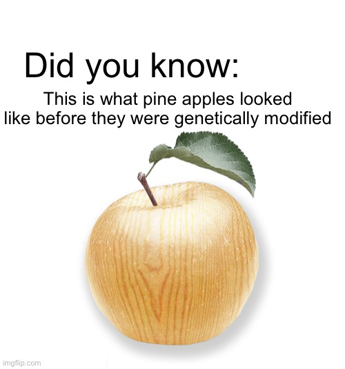 Pine Apple |  Did you know:; This is what pine apples looked like before they were genetically modified | image tagged in pineapple pizza,gmo,fruit,tree,woody | made w/ Imgflip meme maker