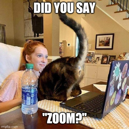 "CAT TAKING ADVANTAGE OF YOUR ZOOM CALLS |  DID YOU SAY; ""ZOOM?"" 