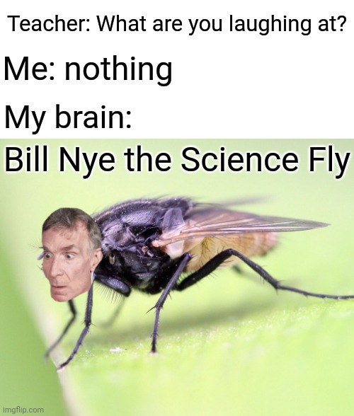 My brain: Bill Nye the Science Fly |  Teacher: What are you laughing at? Me: nothing; My brain:; Bill Nye the Science Fly | image tagged in teacher what are you laughing at,blank white template,funny,memes,meme,bill nye the science guy,memes | made w/ Imgflip meme maker