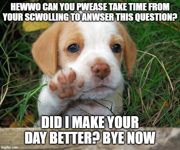 Did I? |  HEWWO CAN YOU PWEASE TAKE TIME FROM YOUR SCWOLLING TO ANWSER THIS QUESTION? DID I MAKE YOUR DAY BETTER? BYE NOW | image tagged in dog puppy bye,imgflip | made w/ Imgflip meme maker
