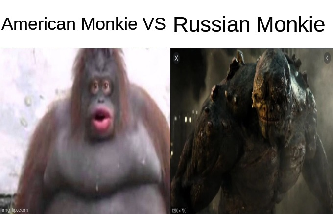 who would win |  American Monkie VS; Russian Monkie | image tagged in puppy monkey baby | made w/ Imgflip meme maker