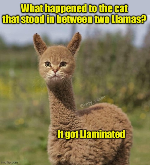 This pun is so bad, alpaca my bags! |  What happened to the cat that stood in between two Llamas? It got Llaminated | image tagged in llama,cat,bad pun,bad puns,visual pun | made w/ Imgflip meme maker