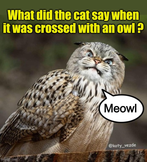 Cat puns |  What did the cat say when it was crossed with an owl ? Meowl | image tagged in cat,owl,bad pun,bad puns | made w/ Imgflip meme maker
