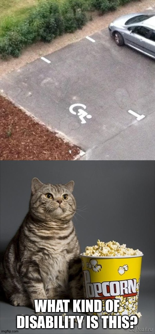 ???? |  WHAT KIND OF DISABILITY IS THIS? | image tagged in cat eating popcorn,memes,you had one job,funny | made w/ Imgflip meme maker
