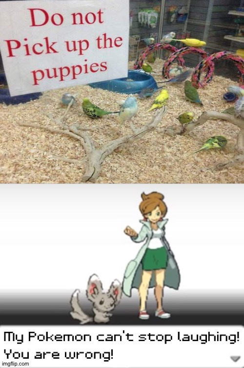 What breed are those? | image tagged in my pokemon can't stop laughing you are wrong,memes,funny,you had one job,task failed successfully,stupid signs | made w/ Imgflip meme maker