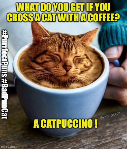Bad Pun Cat |  WHAT DO YOU GET IF YOU CROSS A CAT WITH A COFFEE? #PurrfectPuns #BadPunCat; A CATPUCCINO ! | image tagged in bad pun cat,bad puns,puns | made w/ Imgflip meme maker