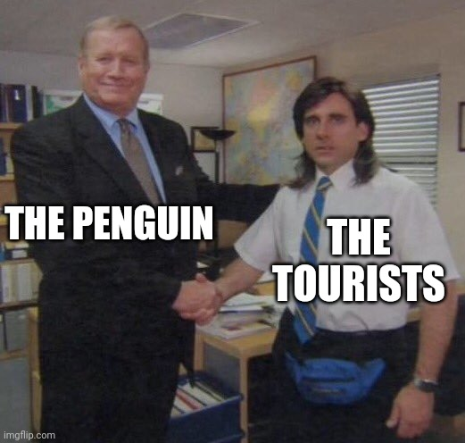 the office congratulations | THE PENGUIN THE TOURISTS | image tagged in the office congratulations | made w/ Imgflip meme maker