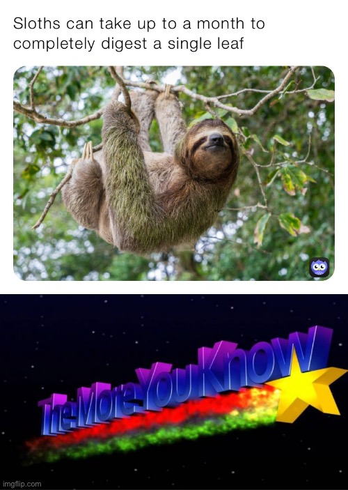 facts about sloths nobody knew and even fewer asked for | image tagged in sloth digestion,the more you know,sloth,sloths,facts,who asked | made w/ Imgflip meme maker