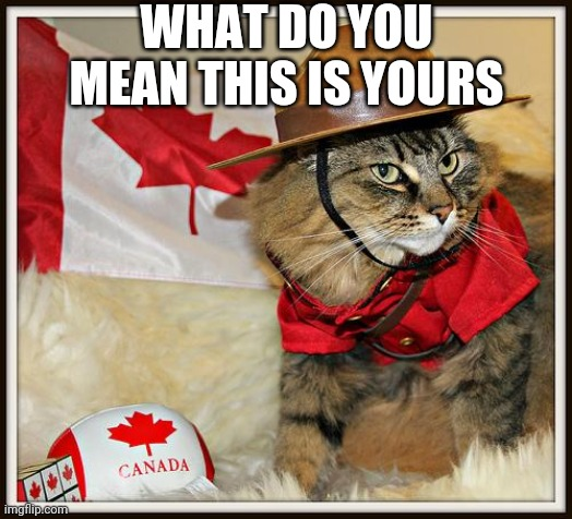 canada cat |  WHAT DO YOU MEAN THIS IS YOURS | image tagged in canada cat | made w/ Imgflip meme maker