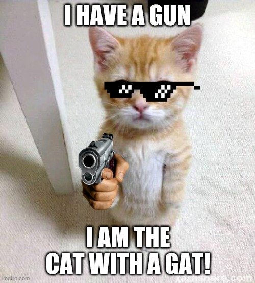 Cute Cat Meme |  I HAVE A GUN; I AM THE CAT WITH A GAT! | image tagged in memes,cute cat | made w/ Imgflip meme maker
