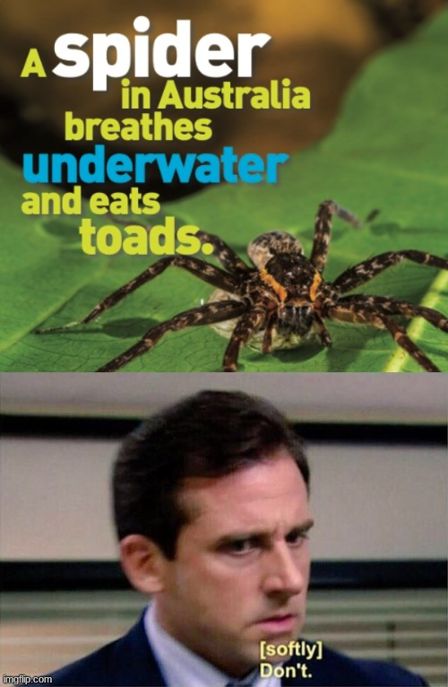 Why does this exist | image tagged in michael scott don't softly | made w/ Imgflip meme maker
