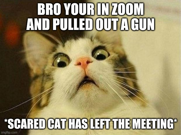 Scared Cat Meme | BRO YOUR IN ZOOM AND PULLED OUT A GUN *SCARED CAT HAS LEFT THE MEETING* | image tagged in memes,scared cat | made w/ Imgflip meme maker