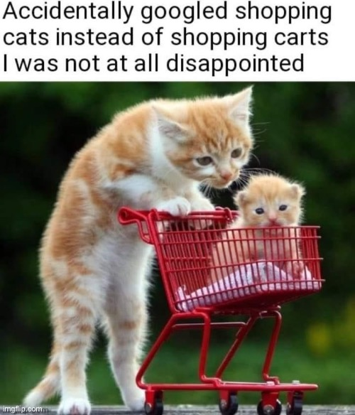 why don't we have both? | image tagged in shopping cats,cats,shopping cart,shopping,repost,why not both | made w/ Imgflip meme maker