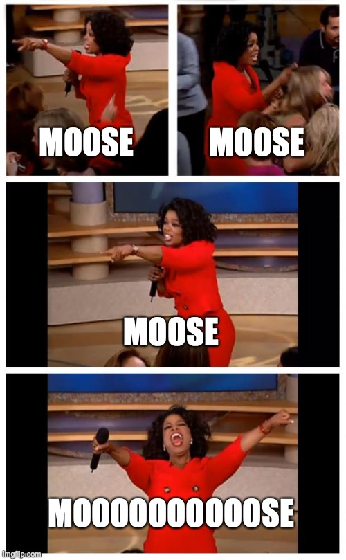 MOOSE |  MOOSE; MOOSE; MOOSE; MOOOOOOOOOOSE | image tagged in memes,oprah you get a car everybody gets a car,moose,best memes,funny memes,good memes | made w/ Imgflip meme maker