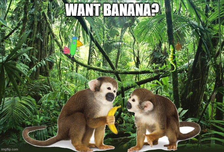 Monke Moment |  WANT BANANA? | image tagged in monkey,monkeys,monke,banana,want banana | made w/ Imgflip meme maker